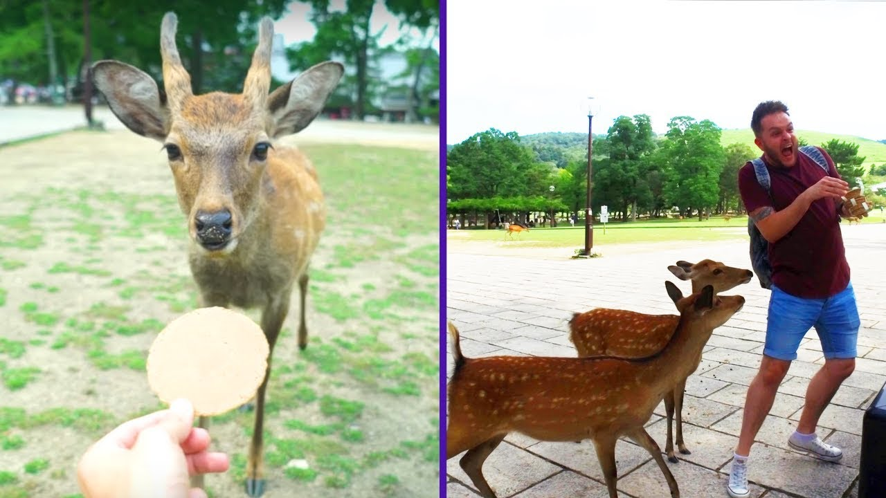 🇯🇵 DEER ATTACK IN NARA PARK! 🇯🇵 | Japan Vlog #3