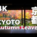 [4K]KYOTO JAPAN 京都の紅葉の名所(東山) Autumn Leaves in Kyoto Higashiyama Area 京都観光 清水寺、東福寺、永観堂、高台寺、圓光寺 日本の絶景
