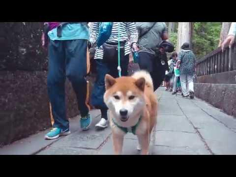 JAPAN TRIP 2018 | TOKYO | KYOTO | OSAKA | NIKKO