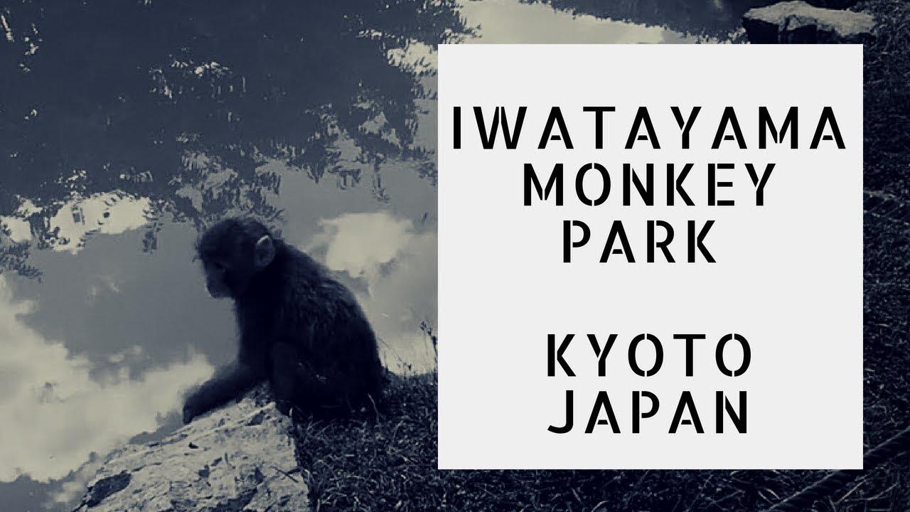 Arashiyama Monkey Park Iwatayama | Kyoto – Japan Travel Tips