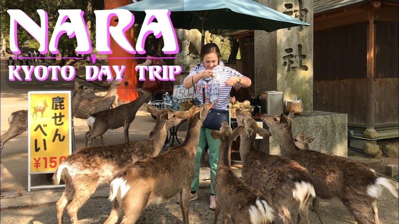 Nara | Kyoto Day Trip