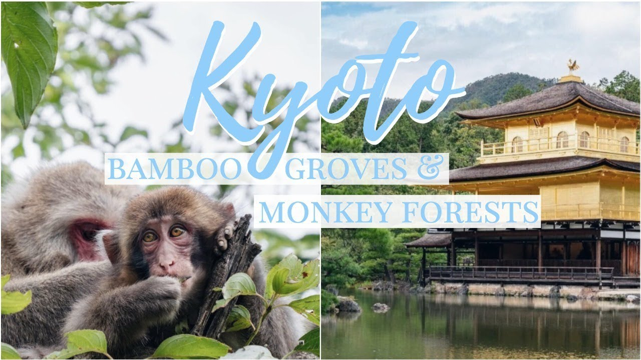 KYOTO SIGHTSEEING | Golden Pavillion, Bamboo Groves & Monkeys