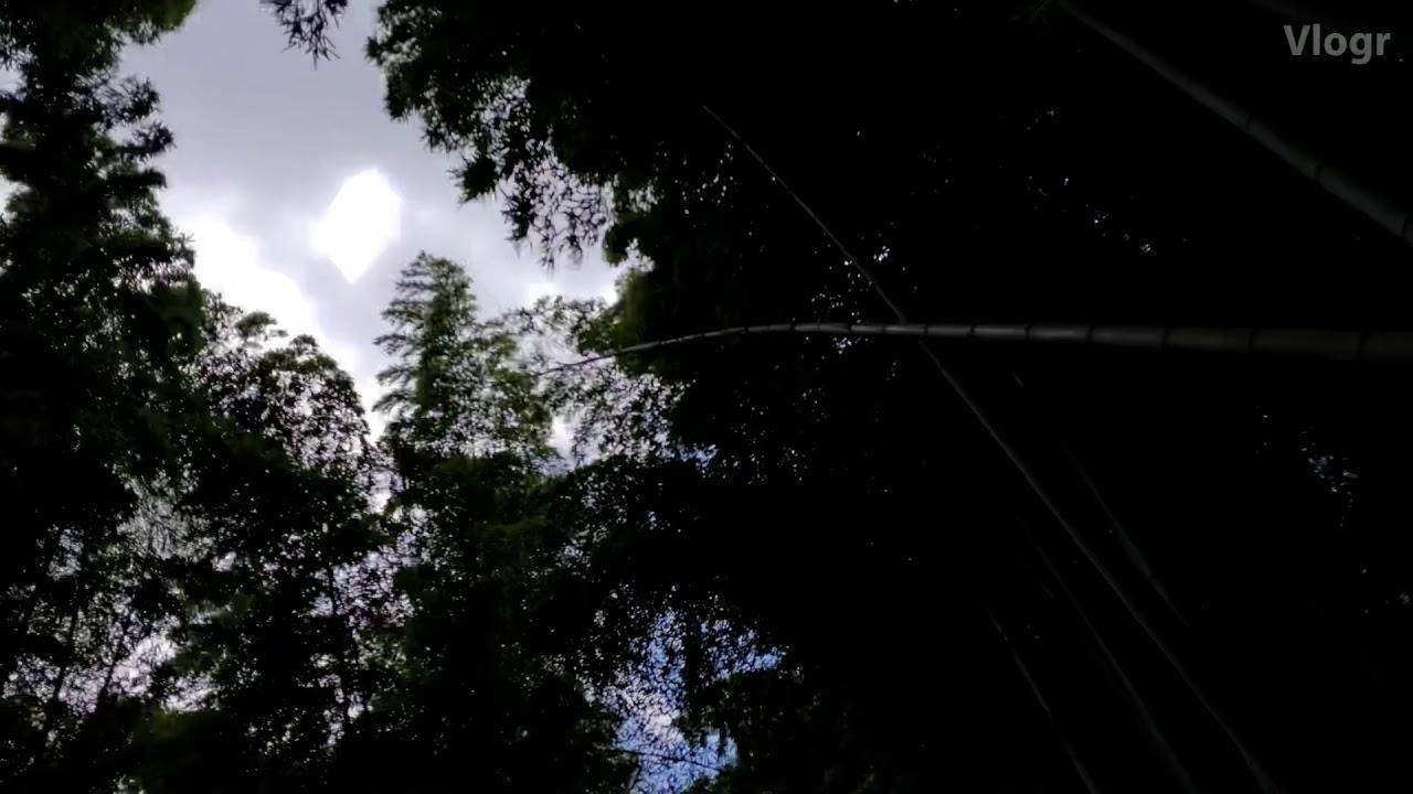 슈가영 VLOG💘 교토 여행 브이로그 / kyoto travel vlog