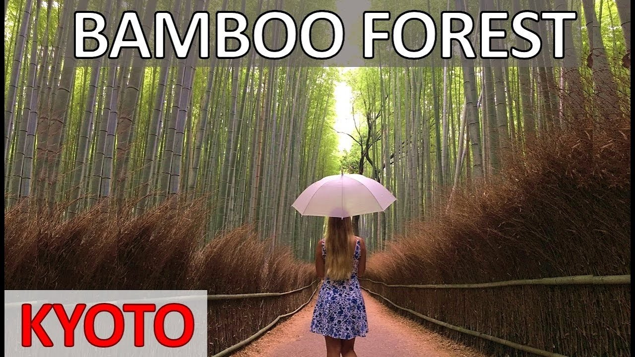 ARASHIYAMA BAMBOO FOREST in Kyoto – Most Beautiful Place in Japan 嵐山竹の森
