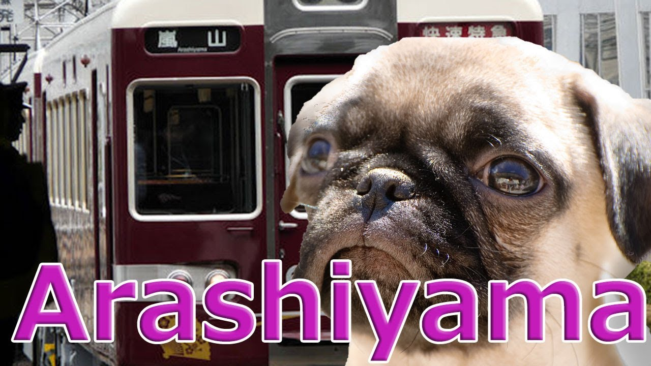 [Japan trip]Hankyu train heading for Kyoto Arashiyama.With Pug dog