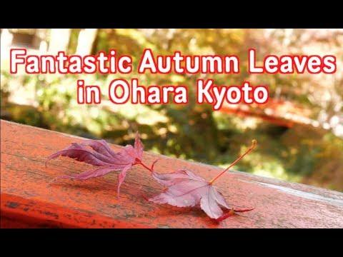 Sanzen-in temple in Ohara Kyoto. Autumn leaves Kyoto Japan guide Nov 2018