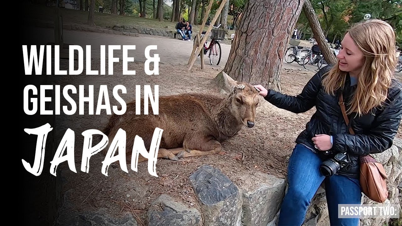 WILDLIFE AND GEISHAS IN JAPAN  // Kyoto/Nara, Japan