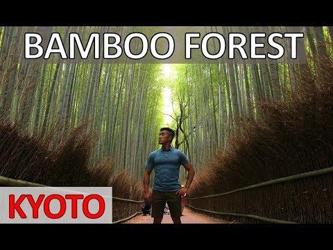ARASHIYAMA BAMBOO FOREST KYOTO GUIDE – Japan Vlog Kyoto Trip  什麼在京都看到