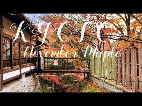 [Travel Vlog] KYOTO maple 11월 교토 단풍놀이 브이로그 (엽서인줄…)