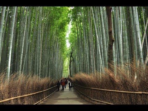Amazing Kyoto – Nara – Fuji – Osaka – Kobe (Japan)