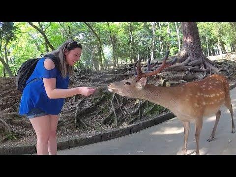 Japan Family Mashup Part 3: Kyoto & Nara