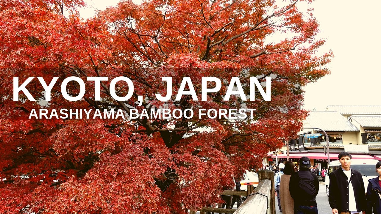 Kyoto, Japan Arashiyama Bamboo Forest