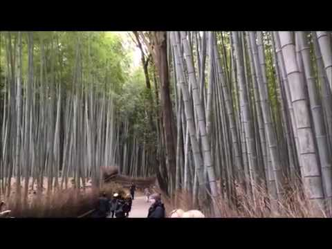 Two day door to door tour to Kyoto from Tokyo by Yuki