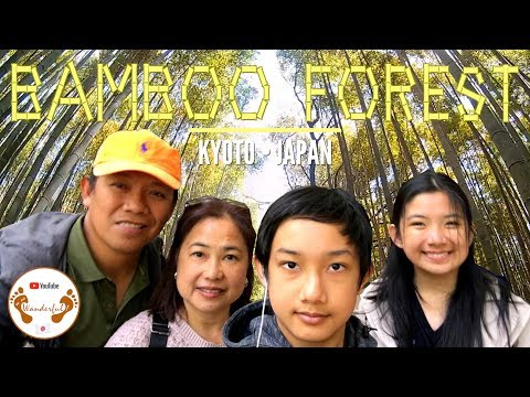 A Bamboo Forest in Kyoto | Kyoto | Japan | We.Are.Wanderful