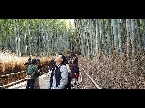 최신 완벽 일본 교토여행 가이드 3일차 Perfect guide for Kyoto,Japan (아라시야마,아라비카커피 ,Arashiyama, Arabica Coffee)