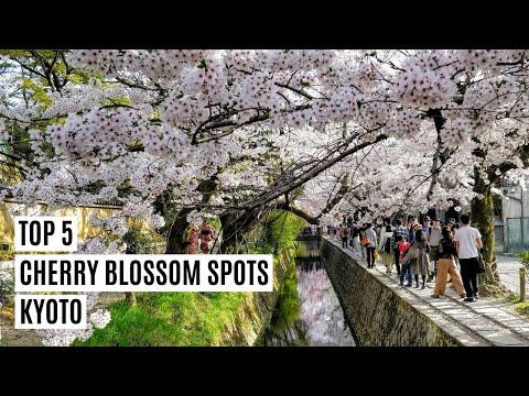 Top 5 Best Cherry Blossom Spots Kyoto Japan