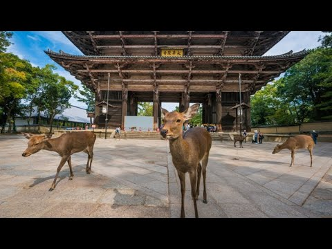 Nara KYOTO Japan Travel Guide