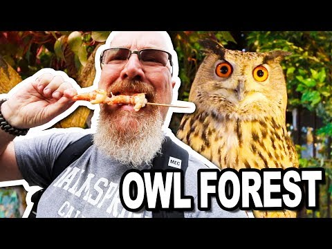 Owl Forest, Shrimp & Hotel Room Tour in Kyoto