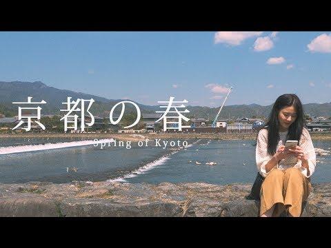 Travel video • Spring of Kyoto 교토의 봄 | Doyeonkim