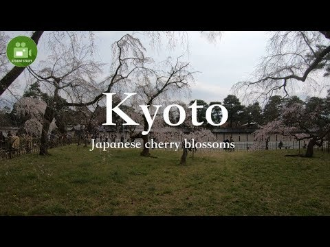 "【Kyoto】4K Cherry blossoms ""Kyoto Gyoen"" Visit Japan Travel Guide☆京都御苑の桜 vol.2"