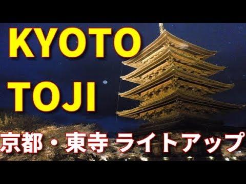 東寺 桜ライトアップ Japan kyoto toji illumination!  京都旅行 kyoto tour