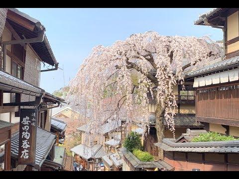 Travel Vlog: 日本 | 大阪 & 京都 & 奈良 | Osaka & Kyoto & Nara😍