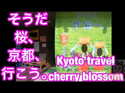 そうだ 桜、京都、行こう。Kyoto travel cherry blossom宇治Uji ⑴-③