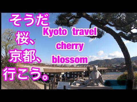 そうだ桜 、 京都、行こう。 Kyoto travel cherry blossom宇治Uji ⑴-①