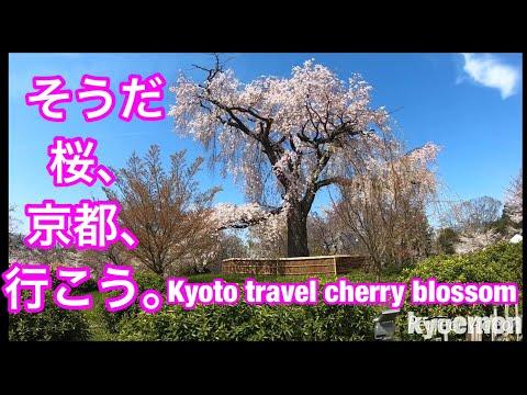 Kyoto TravelGuide MaruyamaPark②YasakaShrine KiyomizuTemple