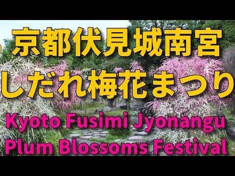 城南宮・梅まつり 京都伏見 Kyoto Fusimi Jyonangu Plum Blossoms Festival