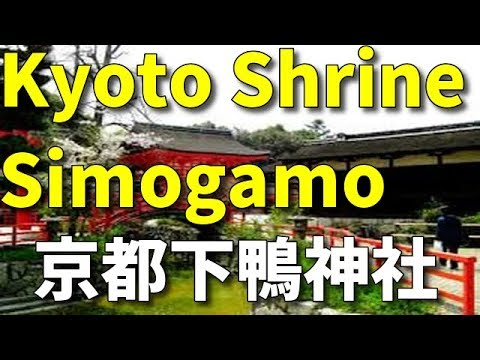 京都下鴨神社 Kyoto Simogamo Shrine 京都旅行 kyoto tour