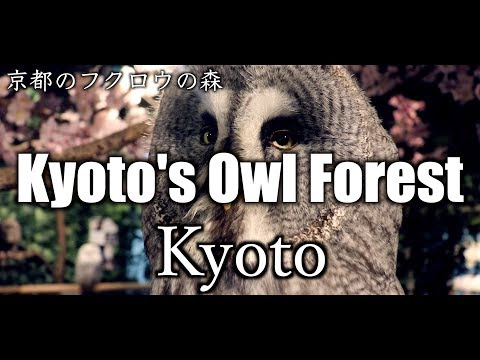 【Vlog】Kyoto's Owl Forest in Kyoto,Japan 【フクロウの森・京都】【京都のフクロウの森】【Solo Travel 】【Kyoto Sightseeing】【癒し】