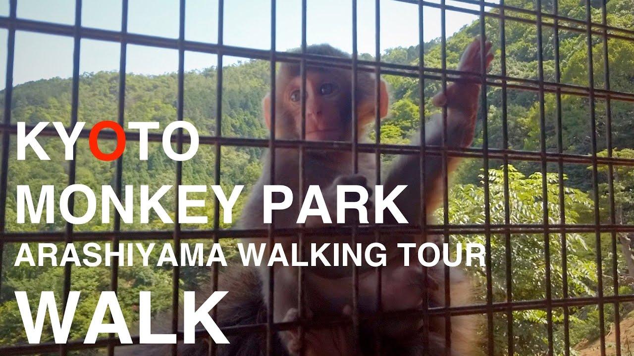 Kyoto Monkey Park  Arashiyama Walking Tour / 京都 モンキーパーク 嵐山歩き旅 散歩