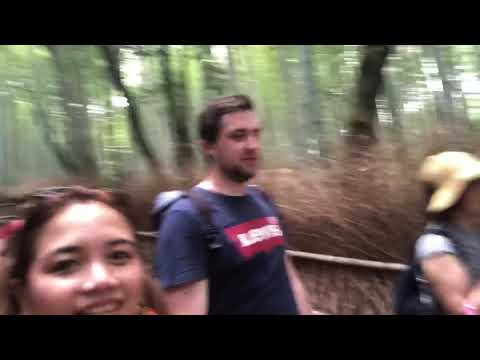 TOP 3 THINGS TO DO IN KYOTO JAPAN