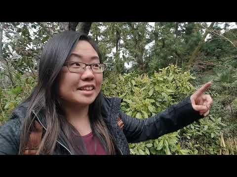 Travel Vlog Japan: Part 4 Kyoto