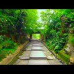 Kyoto Walk – Kodaiji Temple (高台寺) – 4K
