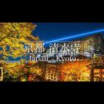 【4K】KYOTO JAPAN – 京都府 清水寺 紅葉 ライトアップ 4K Ultra HD  2019/11/23 / Japan travel movie