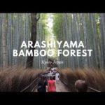 Arashiyama Bamboo Forest   Walk with me tour   Kyoto Japan