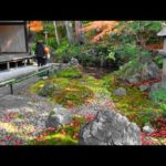 【4K】Kyoto Autumn Leaves Hidden Spot 2019 Eisyou-in – 京都紅葉の穴場 穴場度高め 栄摂院   Japan walking guide