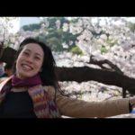 Japan's Cherry Blossom Season Travel Tips | Tokyo to Osaka / Kyoto Sakura