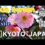 【4K】Nijo Castle Plum Garden Kyoto – 二条城の梅園 京都 | Japan walking guide