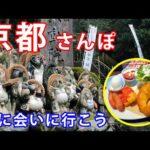 【京都観光】早朝の狸谷山不動院に行ってみた【KYOTO Travel Vlog】